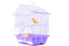 Canary in the Cage Royalty Free Stock Photos