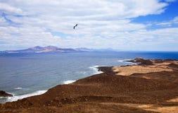 canary de isla海岛小海岛的灰狼 库存照片