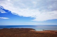 canary de isla海岛小海岛的灰狼 图库摄影