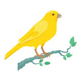 Canary Flat Design Vector Illustration Royalty Free Stock Photo
