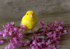 Canary. Royalty Free Stock Image