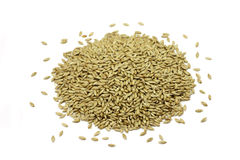 Canary grass seeds of a handful. On a white background royalty free stock images