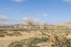 Canary Island - Fuerteventura Stock Photos