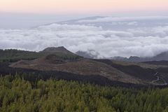 Volcanic landscape with pines Tenerife Canary Islands stock images