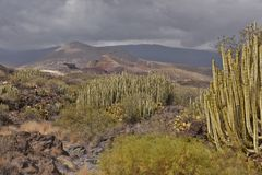 Volcanic landscape with cactus plants Tenerife Canary Islands royalty free stock photos