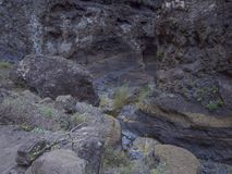 Canary Island, Tenerife, canyon Masca valley with rock, big stones, green tropical bush vegetation and small water stream royalty free stock images
