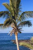 Canary Island Tenerife Royalty Free Stock Photo