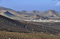Canary Island vineyards  Stock Images