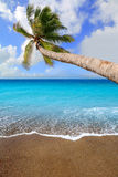 Canary Islands brown sand beach tropical aqua. Canary Islands brown sand beach and tropical aqua water with palm tree Stock Photo