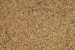 Canary seed Royalty Free Stock Photo