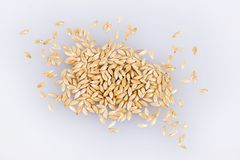 Canary Seeds - Phalaris canariensis. White background stock photography
