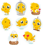 Canary set. Cartoon Canary bird action set collection. With eight different birds in different situations like standing bird, in cage bird, in love bird, singing Stock Images