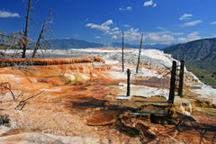 Canary Spring against blue sky in Yellowstone National Park Stock Photo