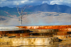 Canary Spring of Yellowstone Park Stock Photos