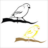 Canary. Vector illustration - Canary on a white background Royalty Free Stock Image