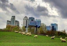 Canary Wharf-mening van het lokale landbouwbedrijf Londen Stock Afbeelding