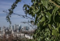 Canary Wharf - a view from the Greenwich park, grean leaves. This image shows a view of a park in Greenwich. We can see Canary Wharf in the background. The Royalty Free Stock Photography