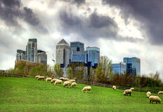 Canary Wharf view from the local farm. London Stock Photography