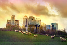 Canary Wharf view from the local farm. London Royalty Free Stock Images