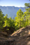 Canary woodland Stock Images