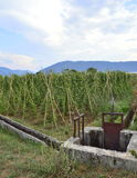 Canaux et champs des haricots blancs Photo libre de droits