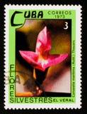 Canavalia maritima, Dzikich kwiatów seria około 1973, Fotografia Royalty Free