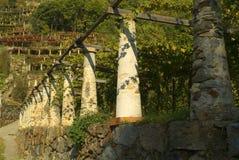 Canavese的典型的葡萄园在意大利 免版税库存照片