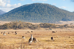 Canberra Royalty Free Stock Photos