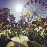 Canberra blommor royaltyfria foton