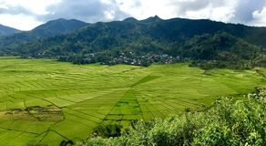 Cancar Spiderweb Rice Fields stock image
