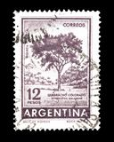 Cancelled postage stamp printed by Argentina. That shows  Red Quebracho tree, circa 1962 stock images