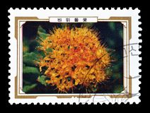 Cancelled postage stamp printed by North Korea. That shows Rhodiola elongata, circa 1989 stock image