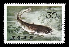 Cancelled postage stamp printed by North Korea. A, that shows Catfish, circa 1975 royalty free stock image