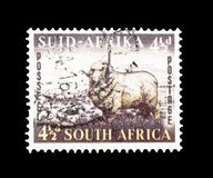 South Africa on postage stamps. Cancelled postage stamp printed by South Africa, that shows Merino Ram and sheep, circa 1953 royalty free stock photos