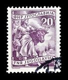 Postage stamp printed by Yugoslavia. Cancelled postage stamp printed by Yugoslavia, that shows Livestock raising, circa 1950 royalty free stock photography