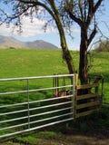 Cancello, albero e montagne Fotografie Stock