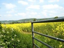 Cancello & campo giallo Immagini Stock Libere da Diritti