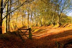 Cancello in legno d'autunno Fotografia Stock