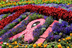 Cancer awareness. Flower garden honoring cancer awareness stock image