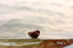 Cancer hermit crab in the shell on a rock on the sea background Stock Photos