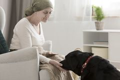 Cancer patient healing from illness. Elderly cancer patient healing from an illness through pet therapy with a black dog Stock Photography