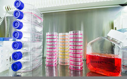 Cancer research equipment. Cell culture flasks and petri dishes for cancer research stock images
