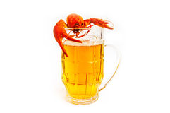 Free Cancer River&beer Stock Image - 11738071