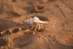 Cancern - eremite Royaltyfria Bilder