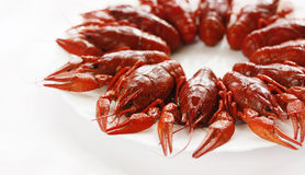 Cancers. Boiled river cancers and beer on a white background Stock Photography