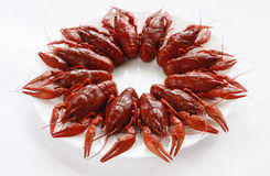 Cancers. Boiled river cancers and beer on a white background Royalty Free Stock Image