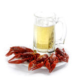 Cancers. Boiled river cancers and beer on a white background Stock Images