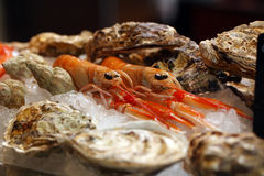 Cancers with oysters in ice Stock Photography