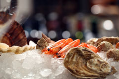Cancers with oysters in ice. Photot of several cancers and oysters on a table with ice royalty free stock photo