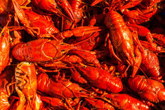 Cancers to beer, boiled crawfish, beer snacks Royalty Free Stock Photography